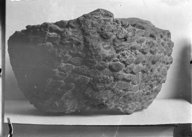 Paleontology File 2