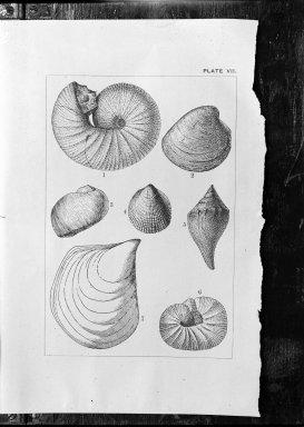 Paleontology File 2 - shells
